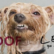 woof l expo
